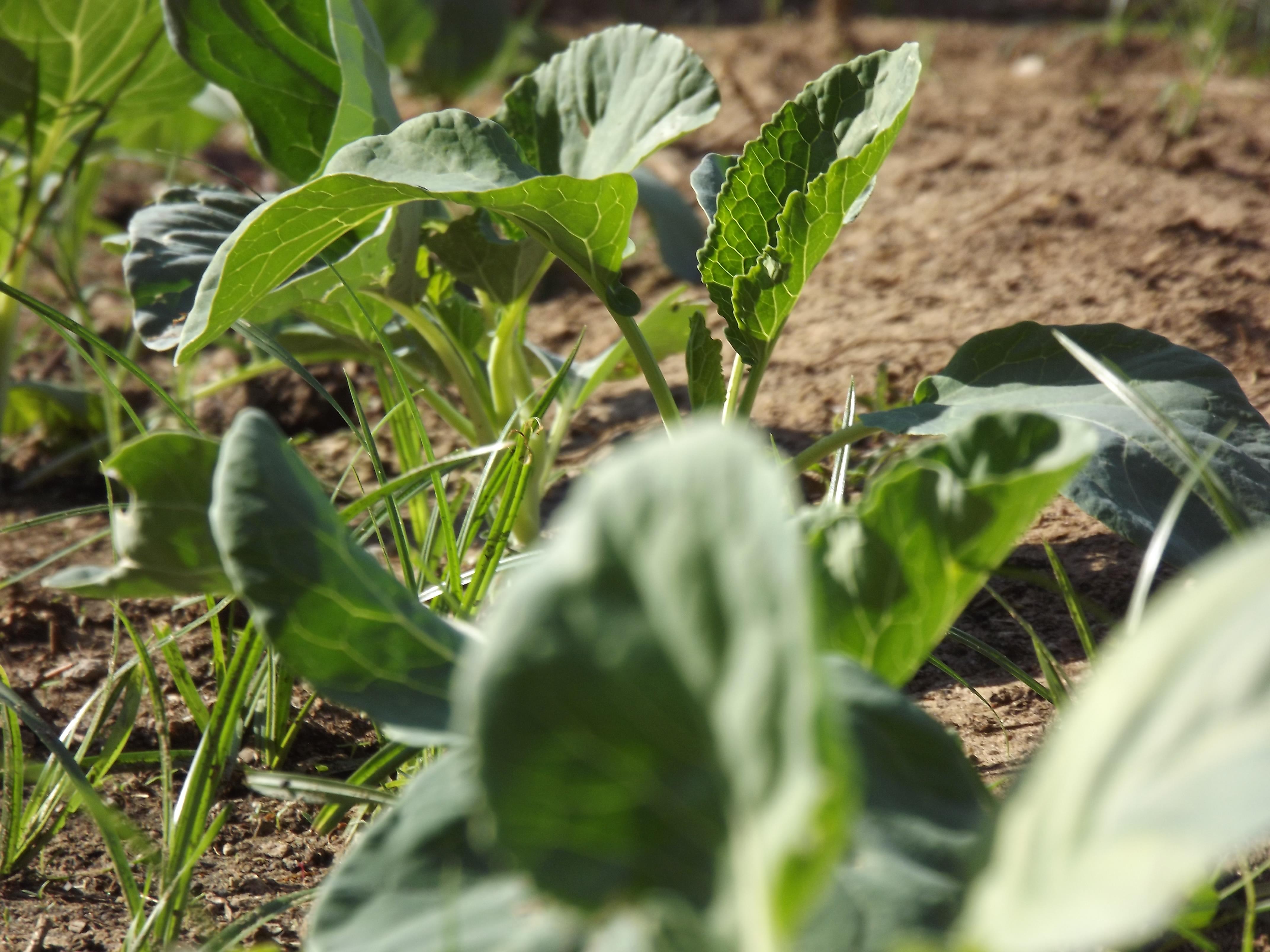 Horta Primavera/Verão 2012